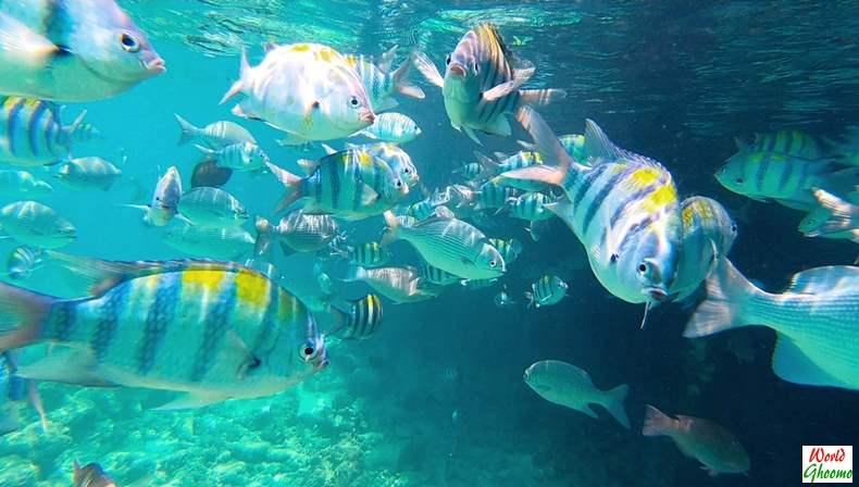 Maldives under water world