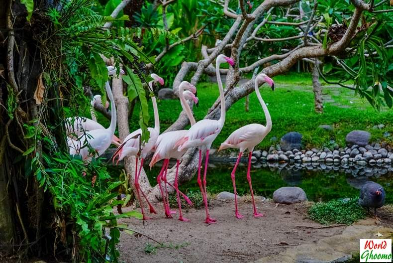 Bali Bird Park guide
