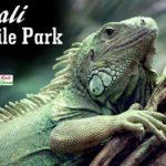 Bali Reptile Park Guide