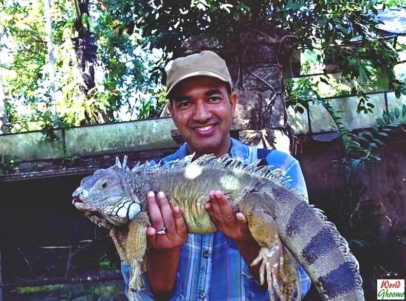Bali Reptile Park Tamed Iguanas