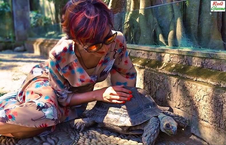 Bali Reptile Park Tortoises