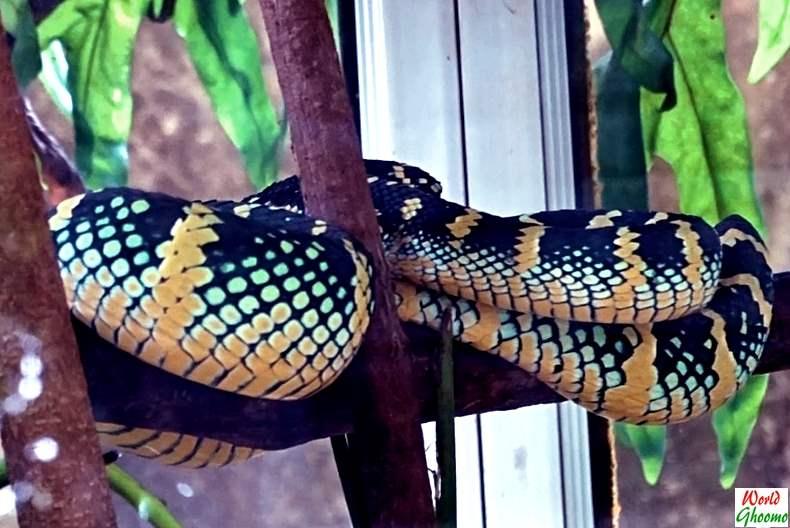 Bali Reptile Park snakes