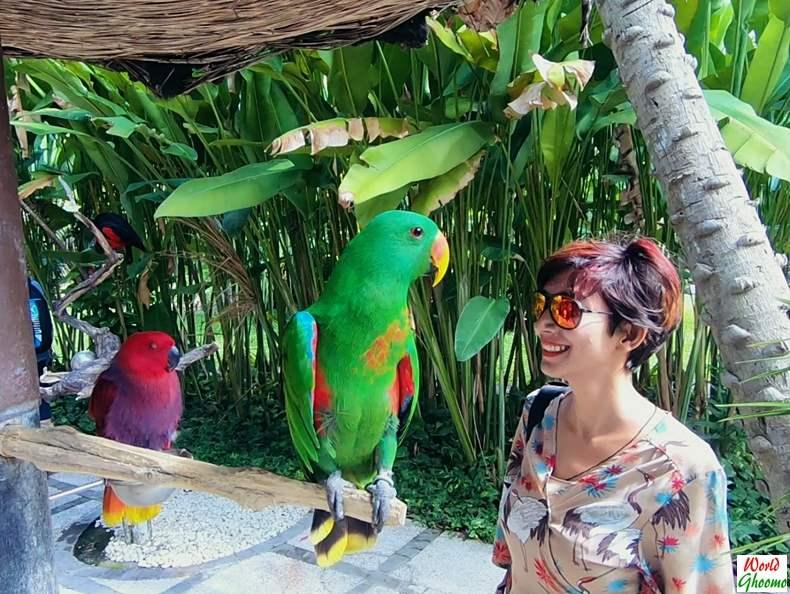 Birds at Bali Bird Park parrots