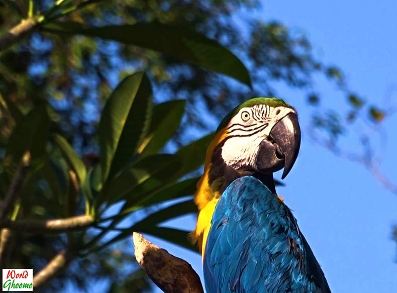 Birds at Bali Bird Park
