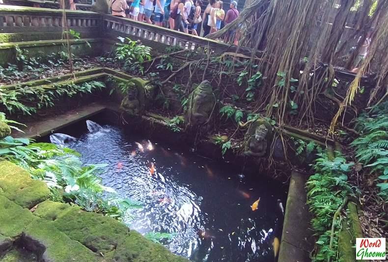 Ponds inside Ubud Monkey Forest