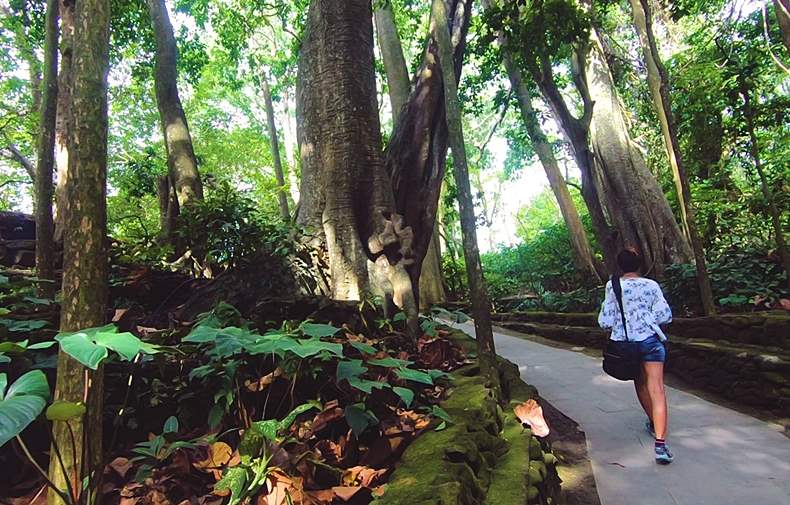 Trees in Ubud Monkey Forest Bali