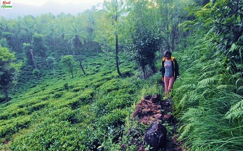 Wayanad Trekking Sites