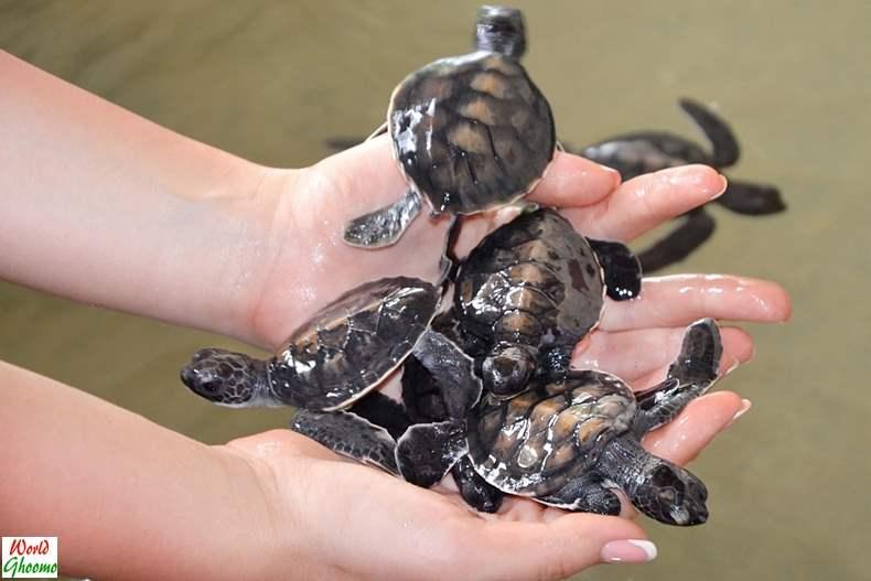 Bentota Sea Turtle Hatchery