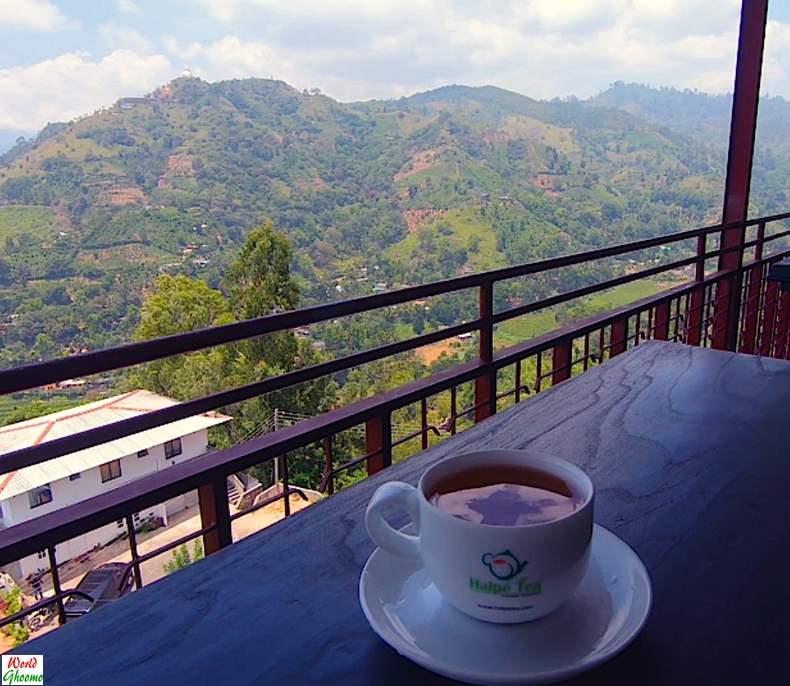 Halpewatte Tea Factory Ella Sri Lanka